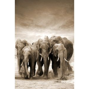 SLIKA 80X120 TOIR21117 - Elephants